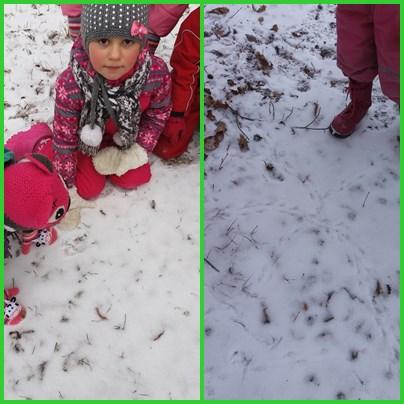 8. Petam dzivnieku un putnu pedinas sniega